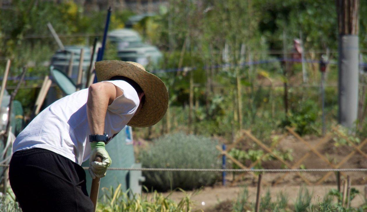 «Chronique d'un jardin solidaire», le témoignage éclairant d'Olivier Pinalie
