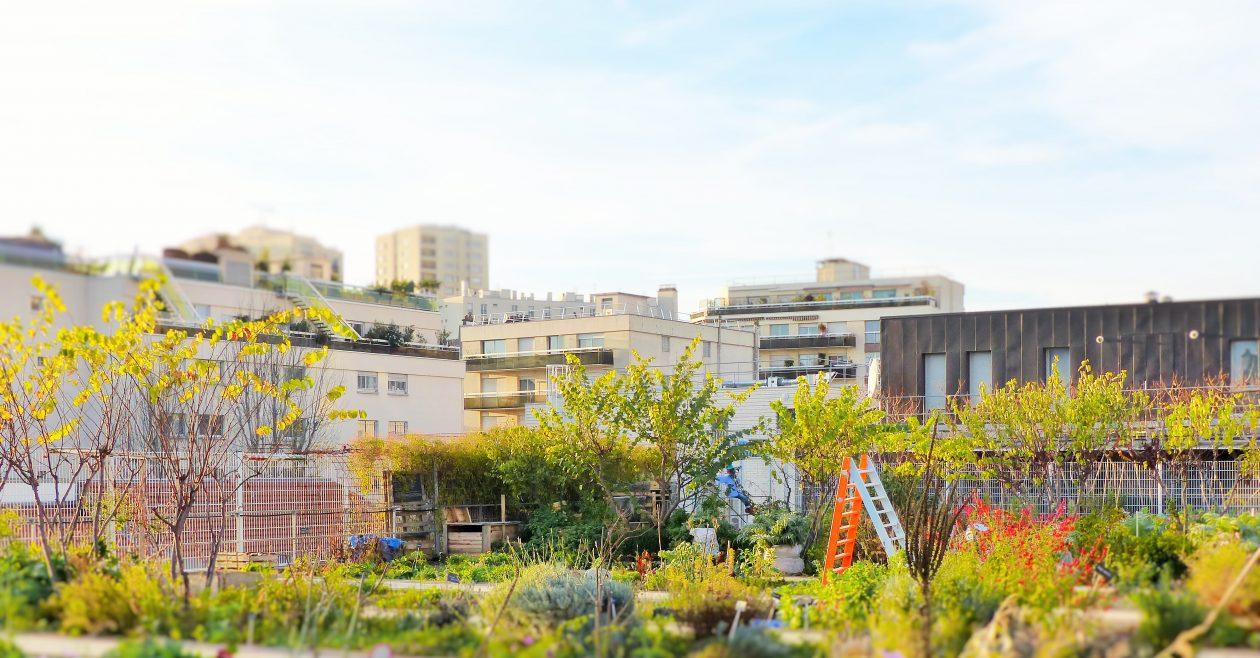 Plus de nature en ville : à quoi ça sert ?