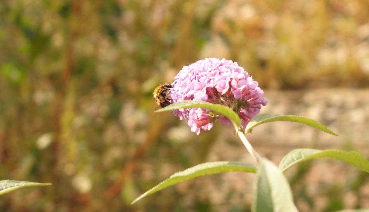 La multiplication des ruches en ville favorise-t-elle vraiment la biodiversité ?
