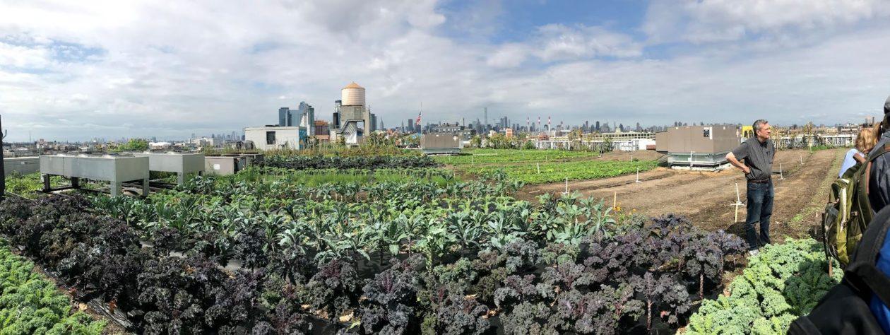 Des toitures végétalisées pour réguler l'effet d'îlot de chaleur urbain