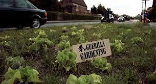 La résistance végétale de Guérilla Gardening