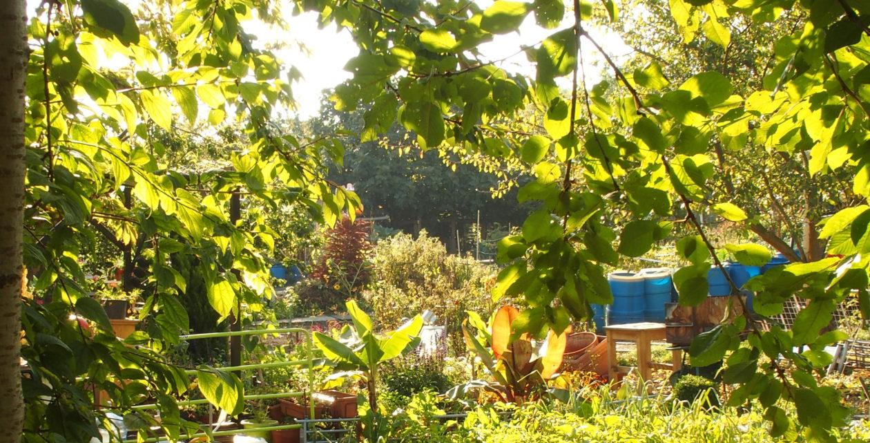 L'esprit de résistance des Jardins des Vertus d'Aubervilliers
