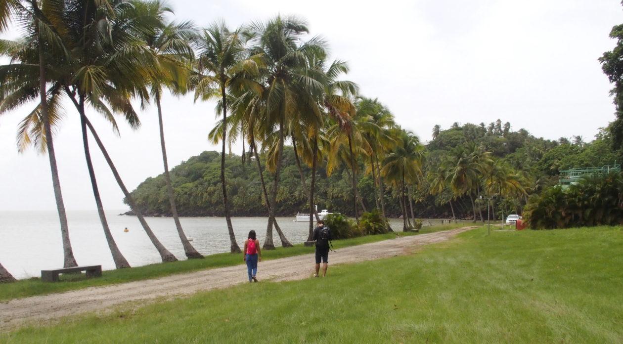 Association Aprosep : un potager urbain en Guyane