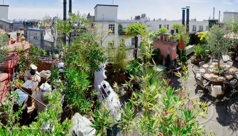 Installer sa ruche en ville : mode d'emploi